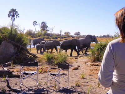 watch In the Footsteps of Elephant streaming