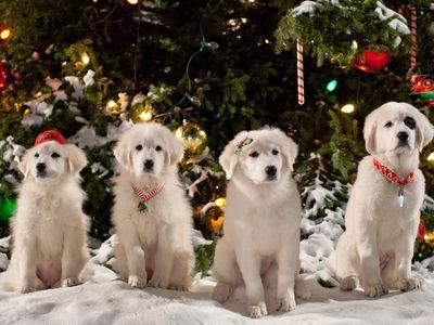 watch Santa Paws 2: The Santa Pups streaming