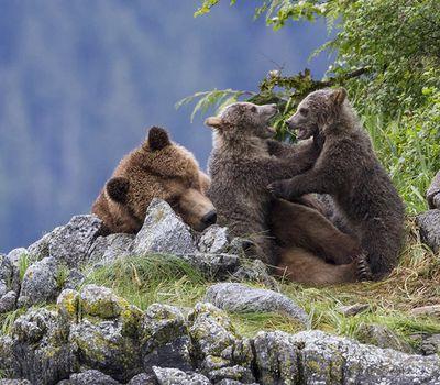 Bears online