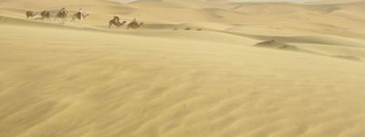 Reine du désert online
