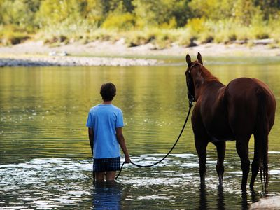 watch Lean on Pete streaming