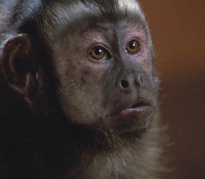 Monkey Shines online