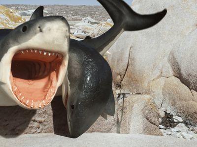 watch 6-Headed Shark Attack streaming