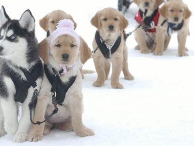 watch Snow Buddies streaming