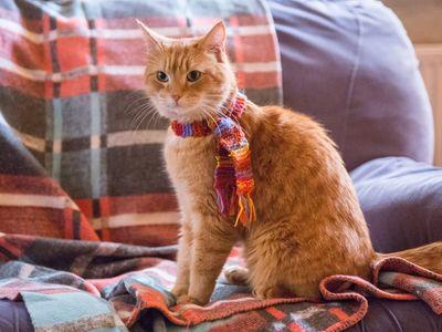 watch A Street Cat Named Bob streaming