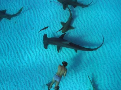 watch Sharkwater Extinction streaming