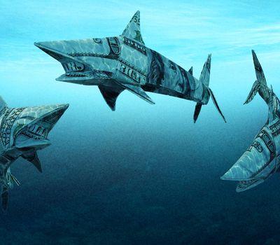 Shark Tank online