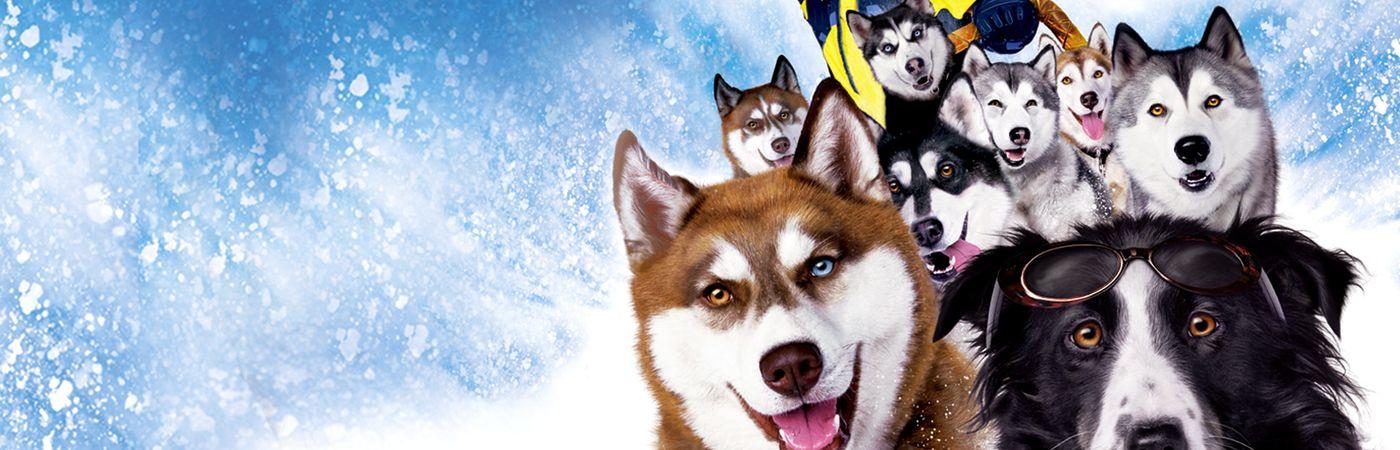 Voir film Chiens des neiges en streaming
