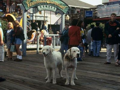 watch Homeward Bound II: Lost in San Francisco streaming