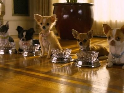 watch Beverly Hills Chihuahua 2 streaming