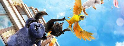 Oscar et le monde des chats online