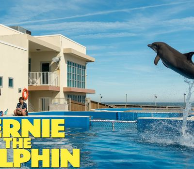 Bernie the Dolphin online
