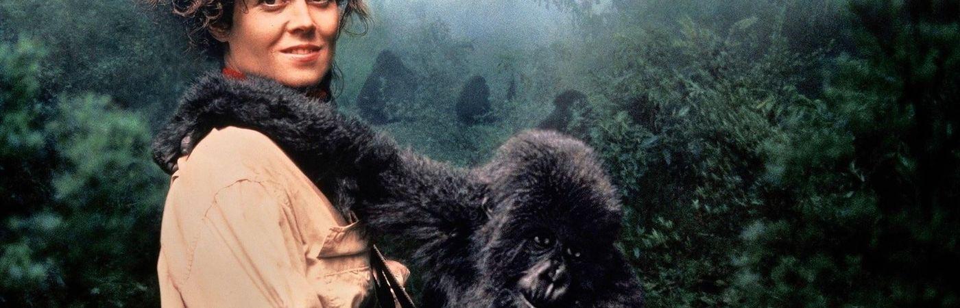 Voir film Gorilles dans la brume en streaming