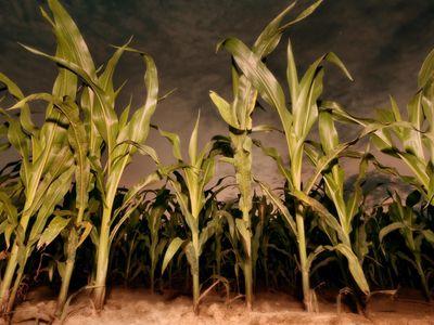 watch Children of the Corn: Revelation streaming