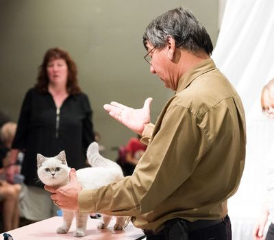 Catwalk: Tales from the Catshow Circuit online