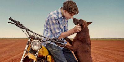 Blue, mon chien d'Australie en streaming