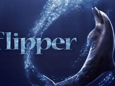 watch Flipper streaming