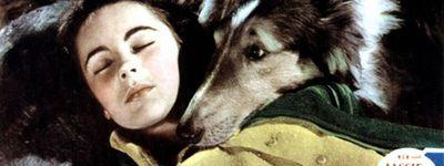 Le courage de Lassie online