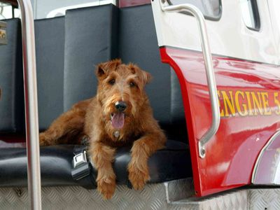 watch Firehouse Dog streaming