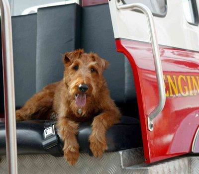 Firehouse Dog online