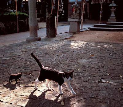 岩合光昭の世界ネコ歩き online