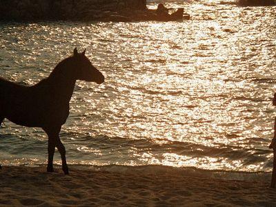 watch The Black Stallion streaming
