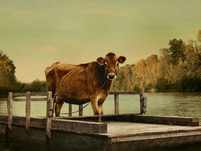 watch First Cow streaming