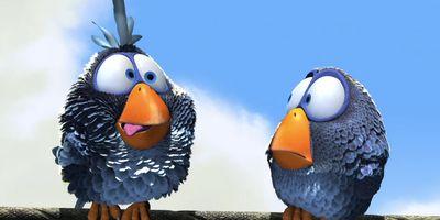 Drôles d'oiseaux sur une ligne à haute tension STREAMING