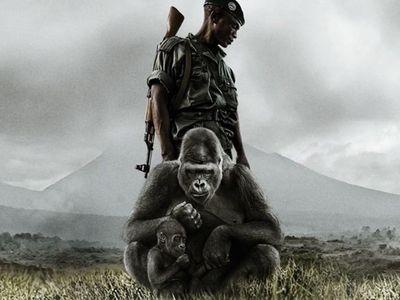 watch Virunga streaming