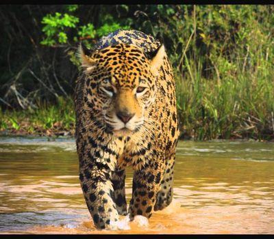 Colombia: Wild Magic online