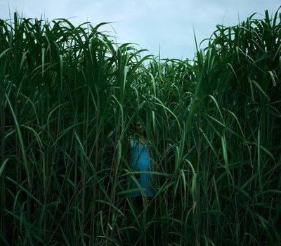 In the Tall Grass online