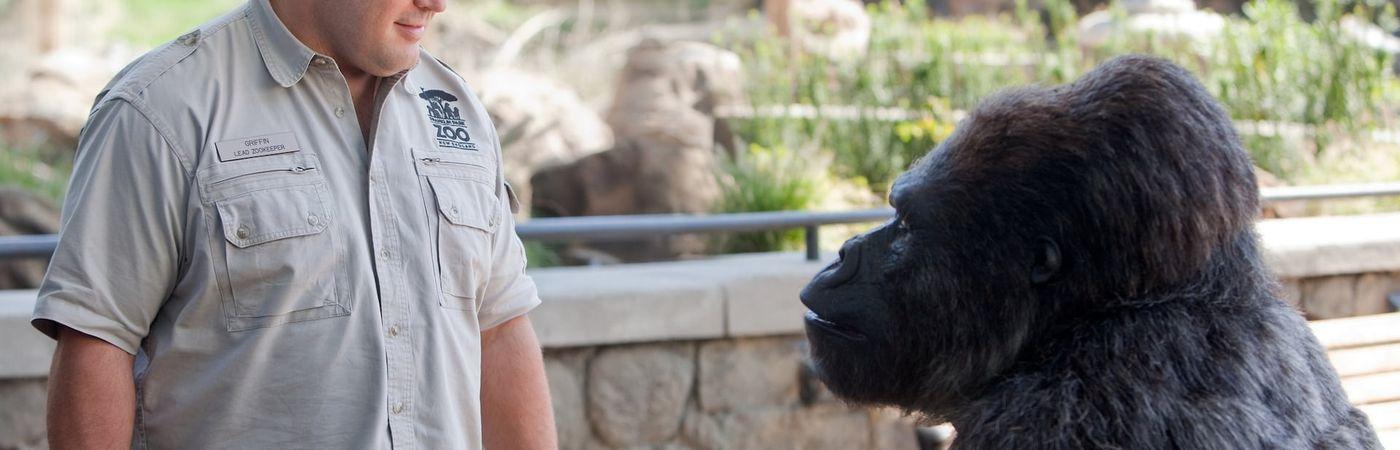 Voir film Zookeeper en streaming