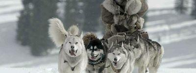 The Great Alaskan Race online