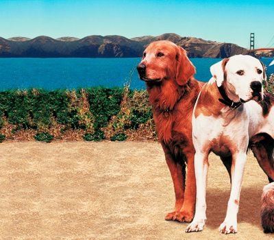 Homeward Bound II: Lost in San Francisco online