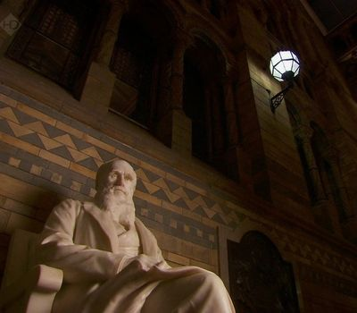 Charles Darwin and the Tree of Life online