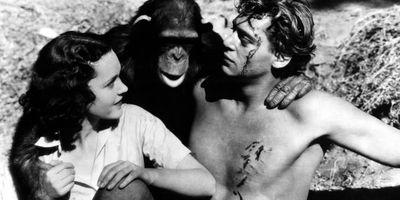 Tarzan, l'homme singe STREAMING
