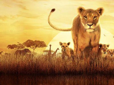 watch Serengeti streaming