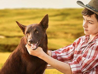 watch Red Dog: True Blue streaming