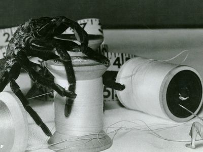 watch The Incredible Shrinking Man streaming