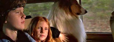 Lassie : Des amis pour la vie online