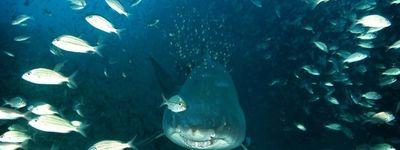 Deep Sea : Dansons sous la mer online