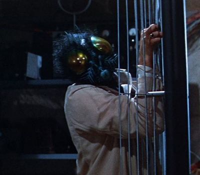 The Fly online