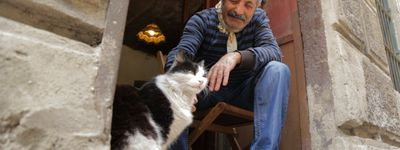 Kedi - Des chats et des hommes online