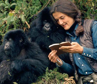 Dian Fossey: Secrets in the Mist online
