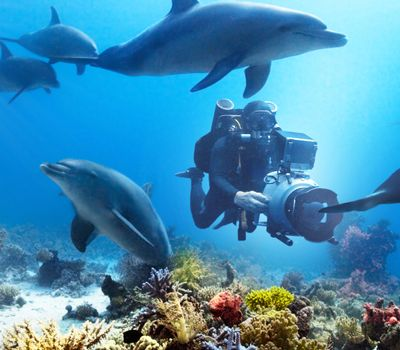 Diving with Dolphins online