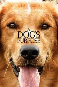 A Dog's Purpose streaming vf