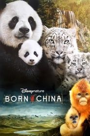 Born in China streaming vf
