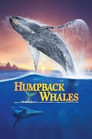 Humpback Whales streaming vf