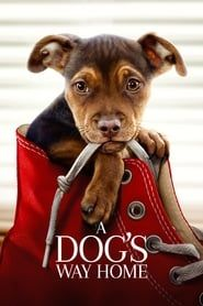 A Dog's Way Home streaming vf