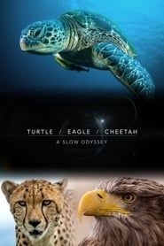 Turtle, Eagle, Cheetah: A Slow Odyssey streaming vf